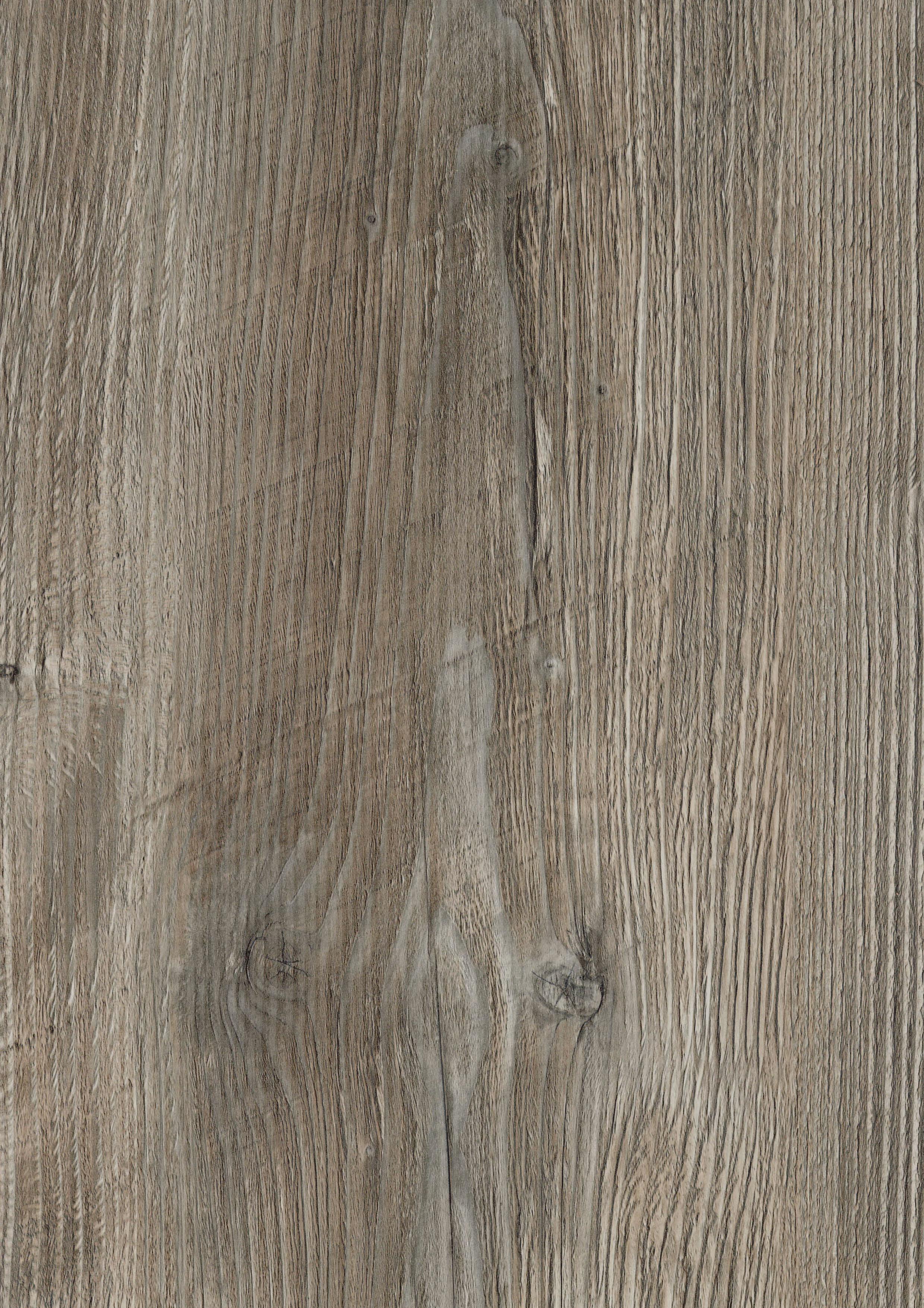 Ponderosa Pine 4351