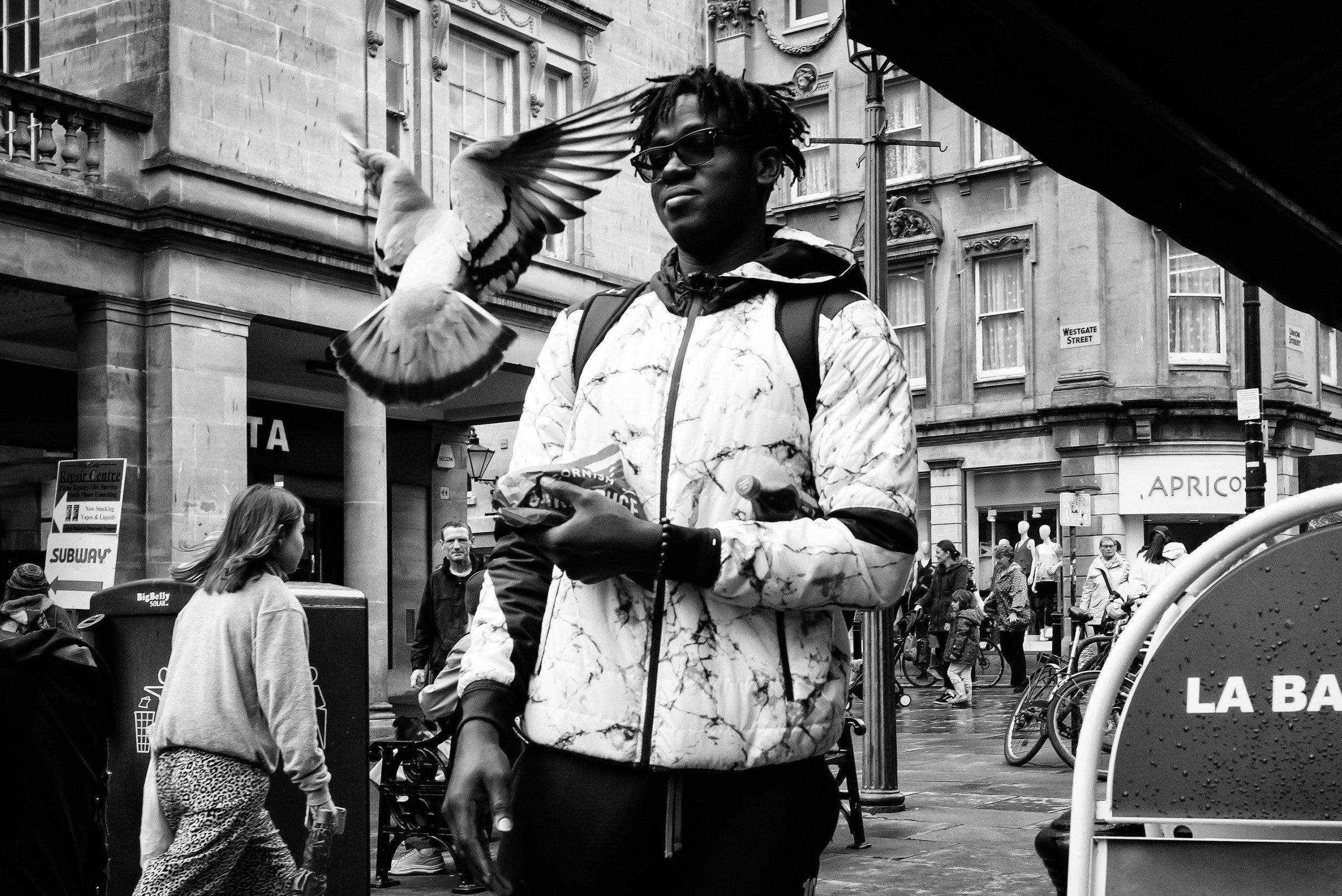 Pigeon Fancier.jpg