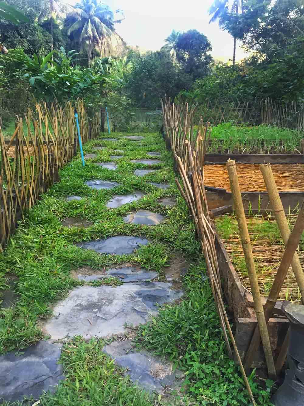 Tamarind's farm.