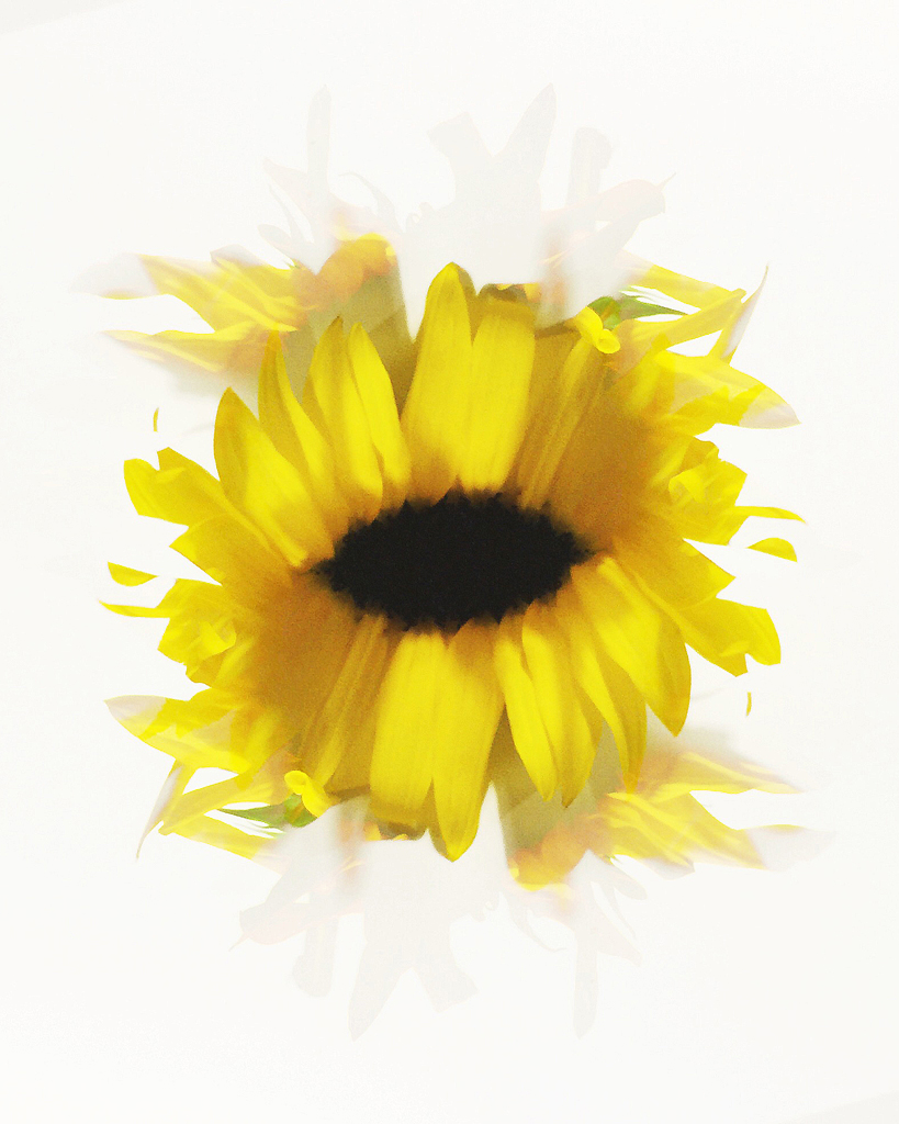 AlexisMolinaro_AltCamera_Sunflower.jpg