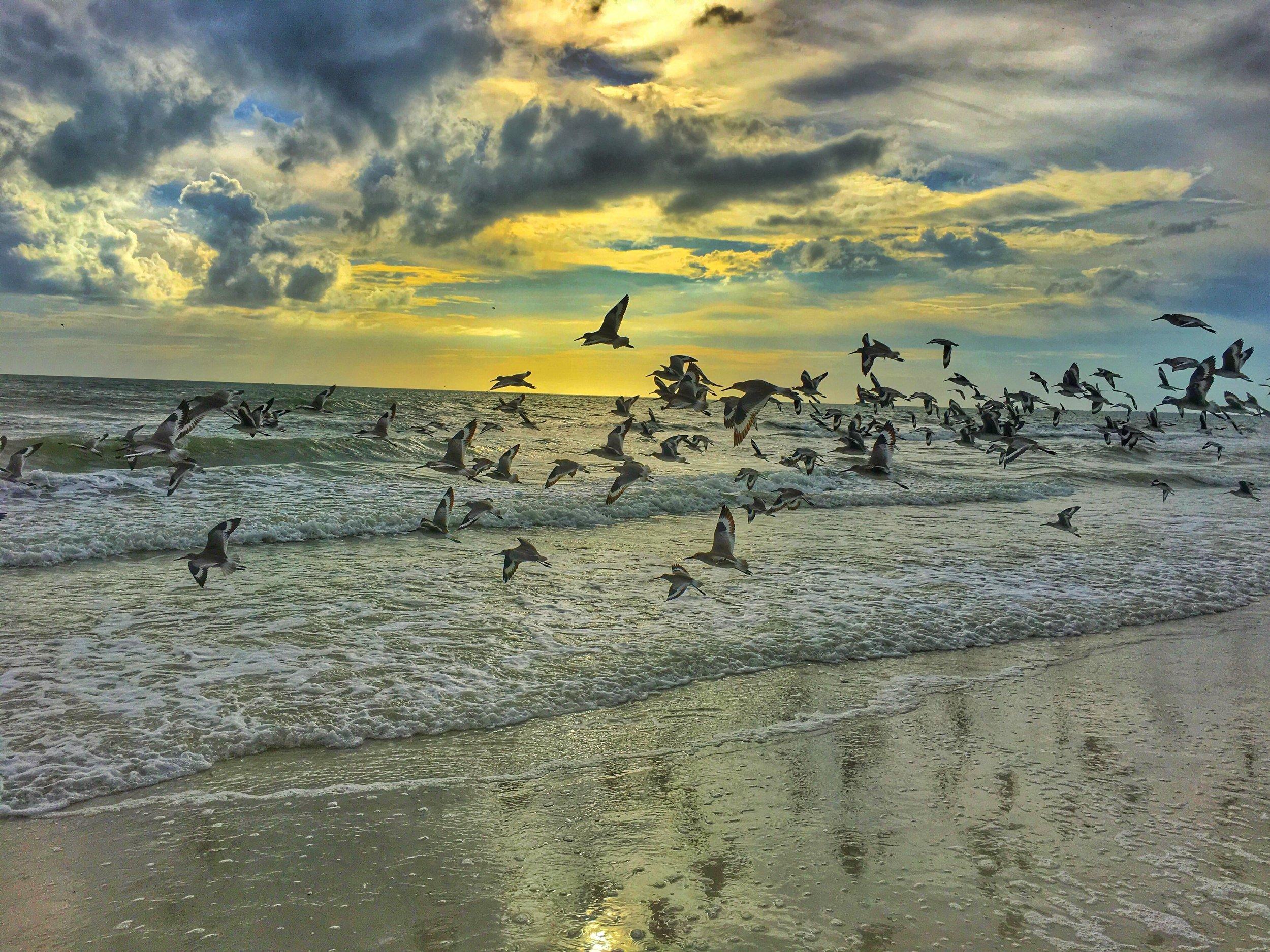 Florida Seashore.jpg