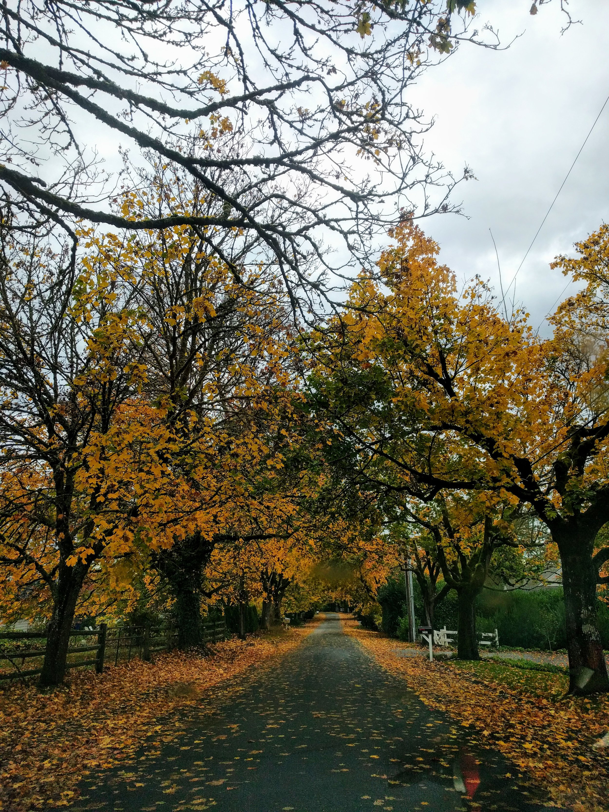 Personal Autumn