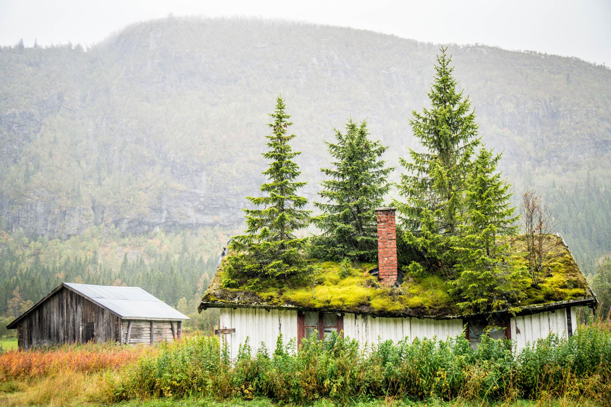 grass-roof.jpg