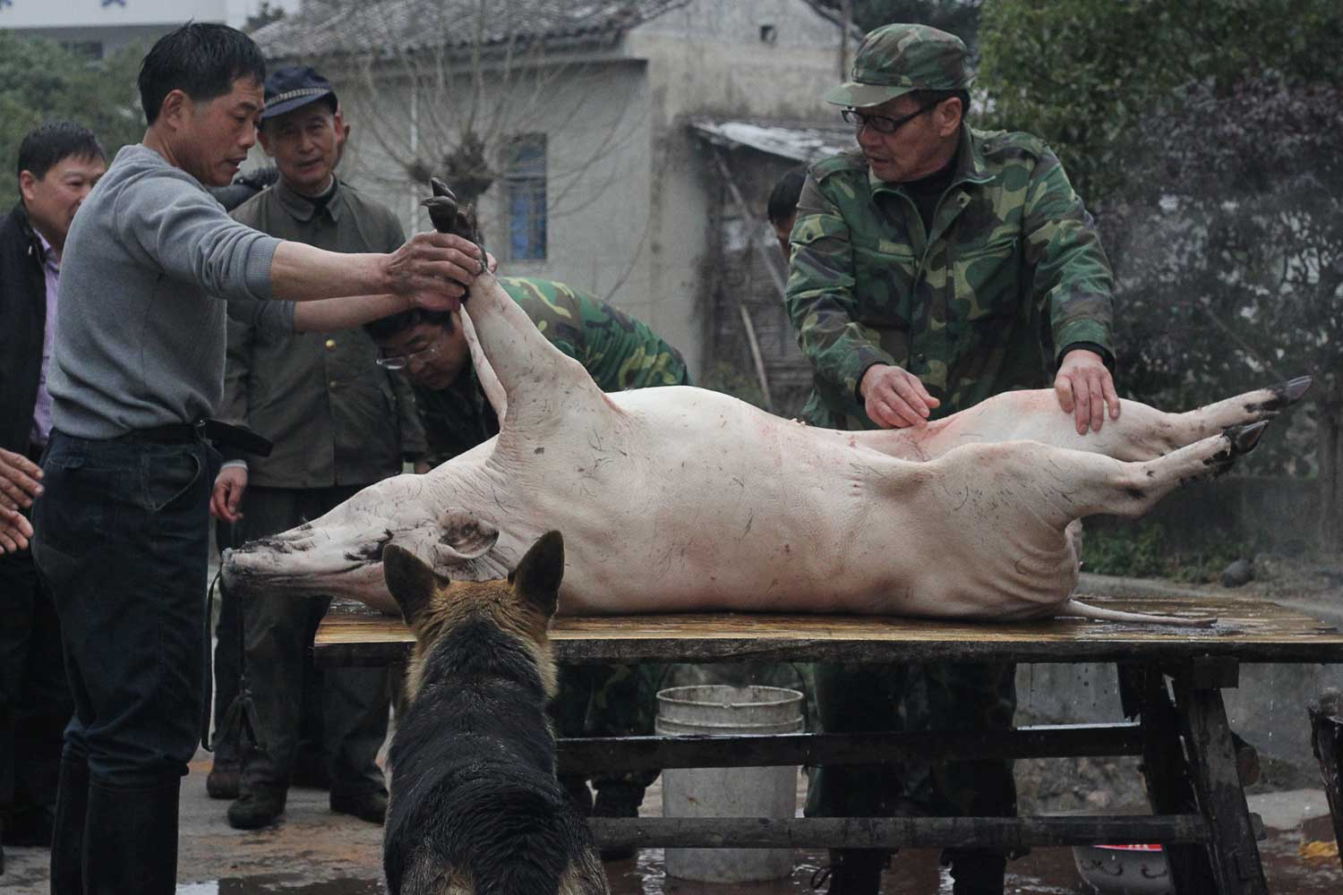 """""""Having spent years in kitchens across the world,I understand as much as any prep cook the basics of how to take apart an animal. The majority of those rules do not apply in rural mountainous China with a wild boar on a wooden-table-turned-carving-block in the middle of the village"""""""