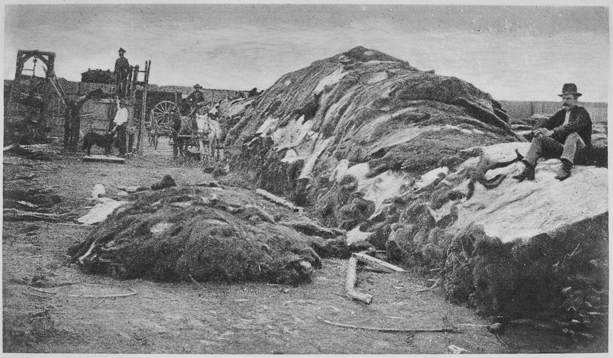 Rath & Wright's Buffalo Hide Yard, Dodge City, Kansas, 1878.                                                                          Image from the National Archive and Records Administration