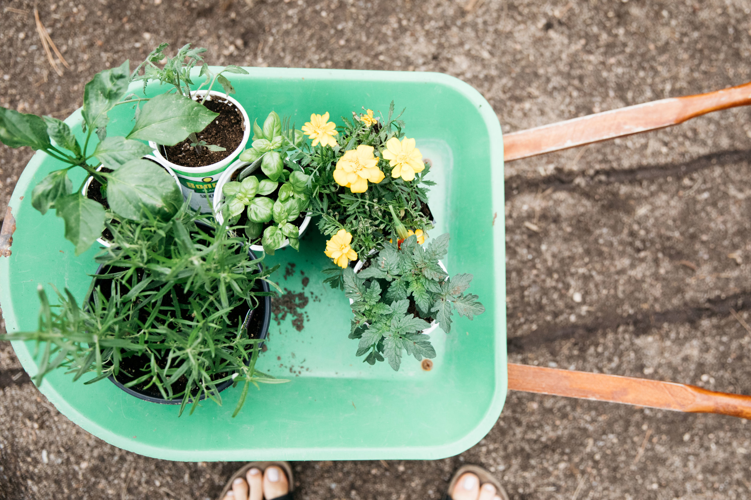 high-altitude-gardening-2.jpg