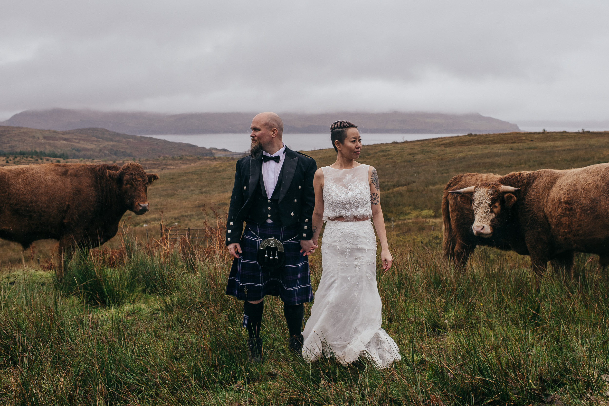 Highland Cows Wedding