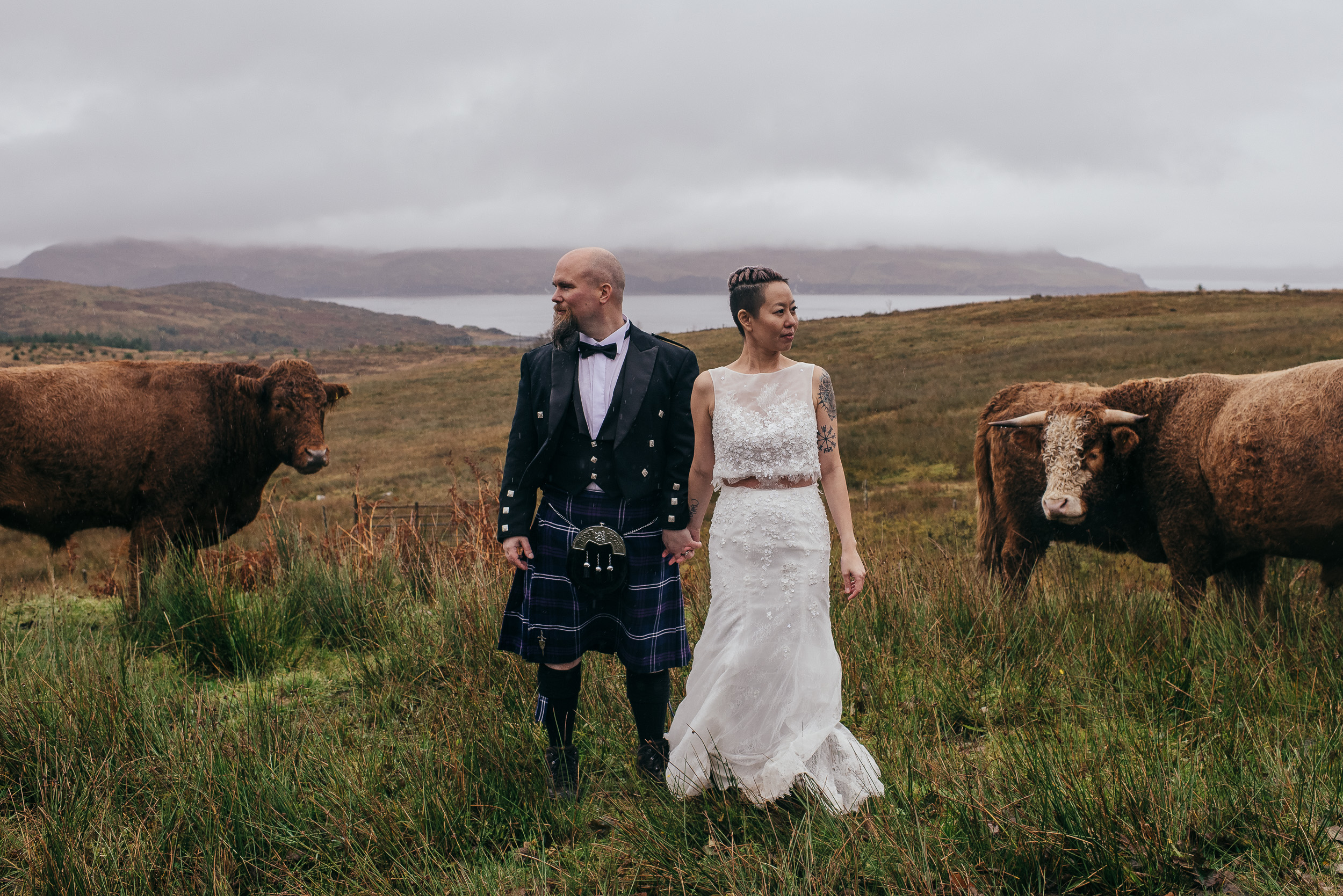 Bride and groom with highland cows Isle of Skye