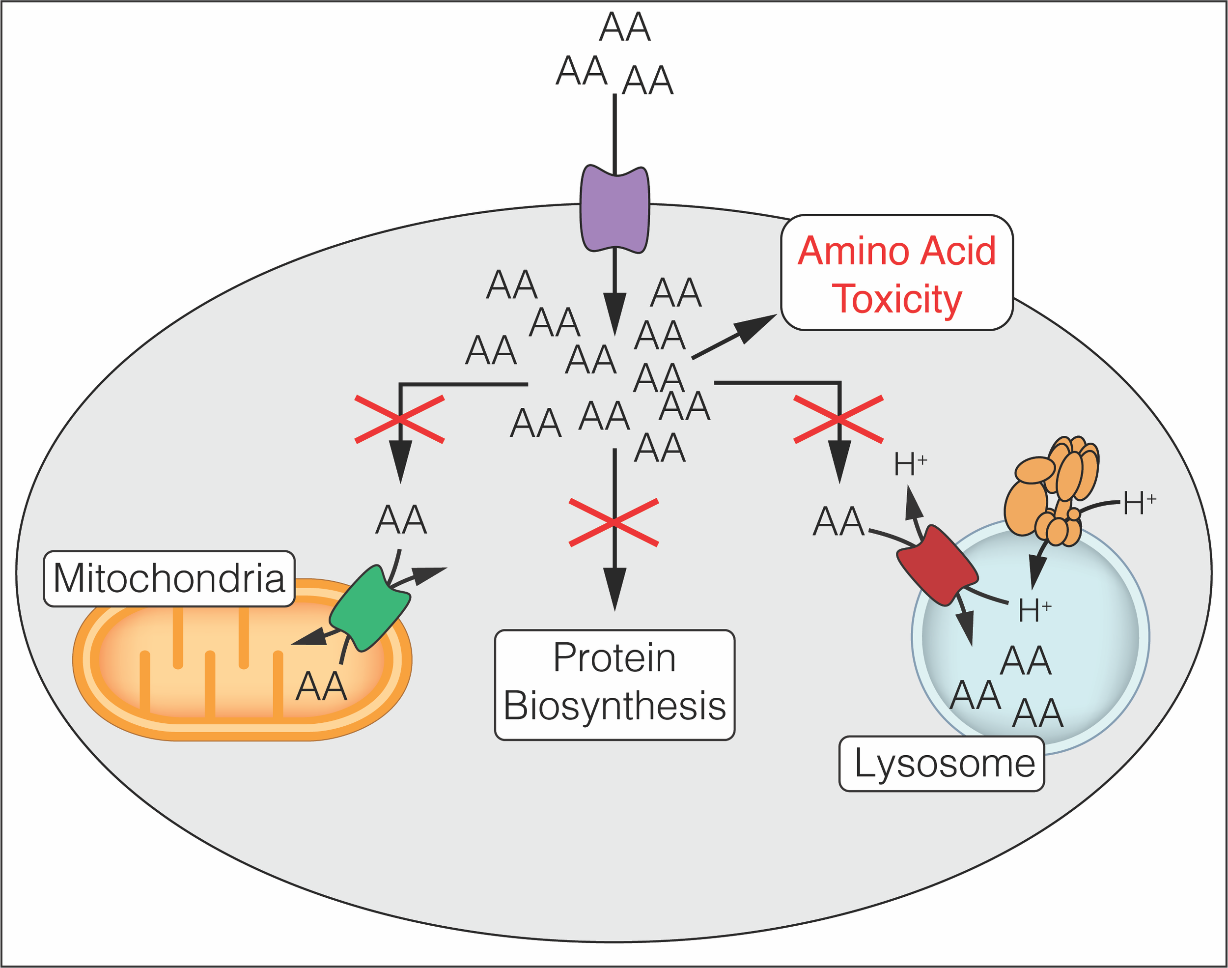 Metabolite Toxicity as a Driver of Aging and Disease.png