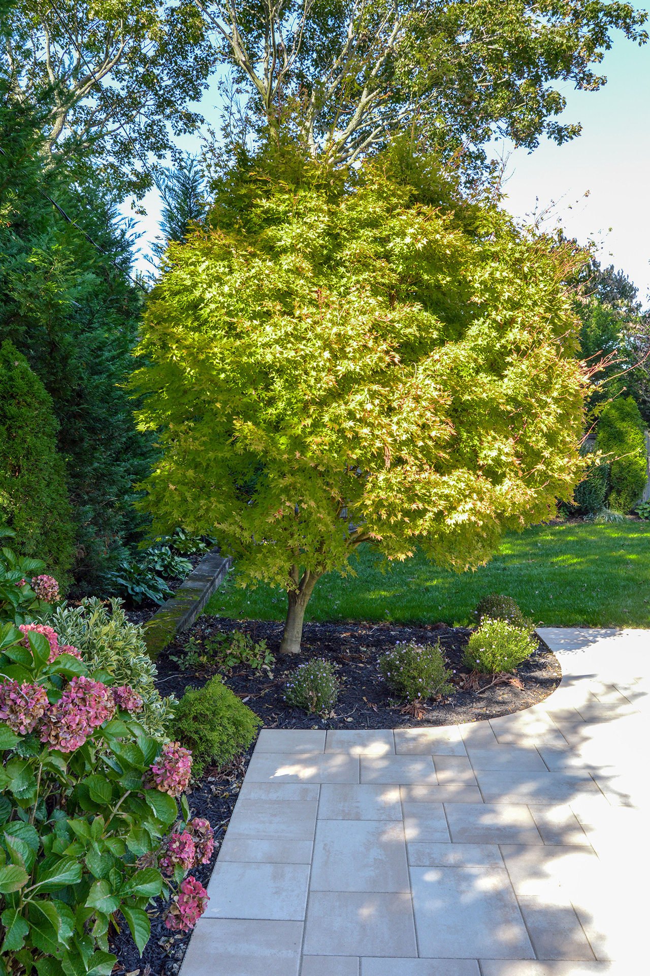Plantings and shrubs in Long Island, NY