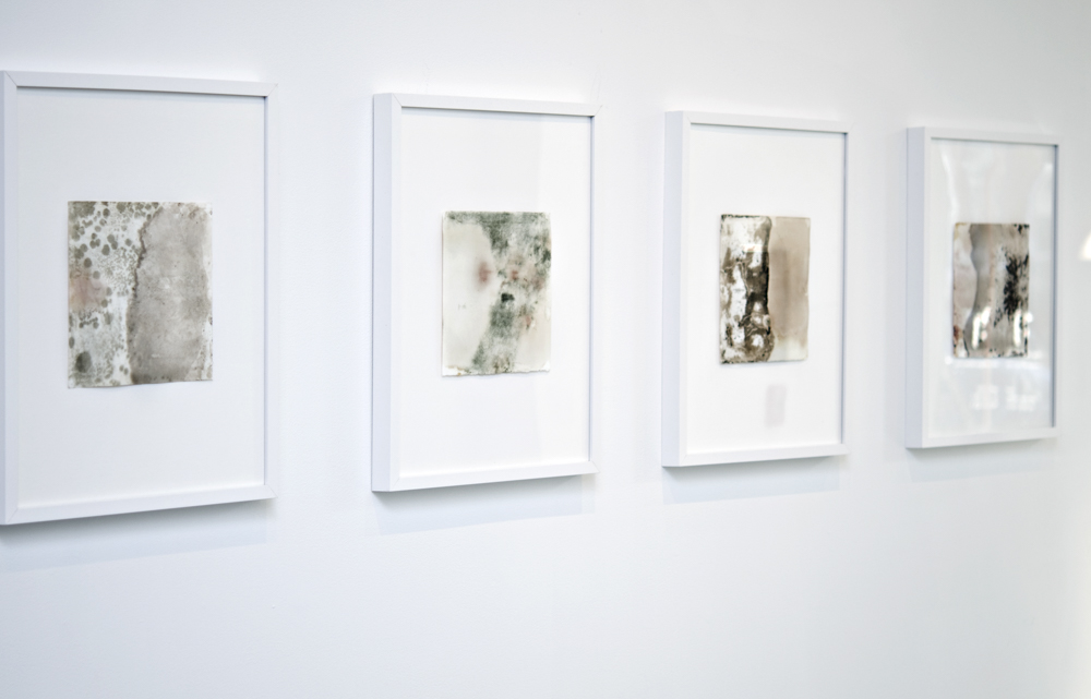 Balci.Selin. Boundary (Overview II). Microbial growth on paper.16x20 in framed.2011.JPG