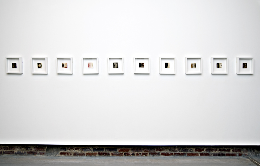 Balci.Selin. Interface (Overview II). Microbial growth on paper.10x10in for four.2011.JPG