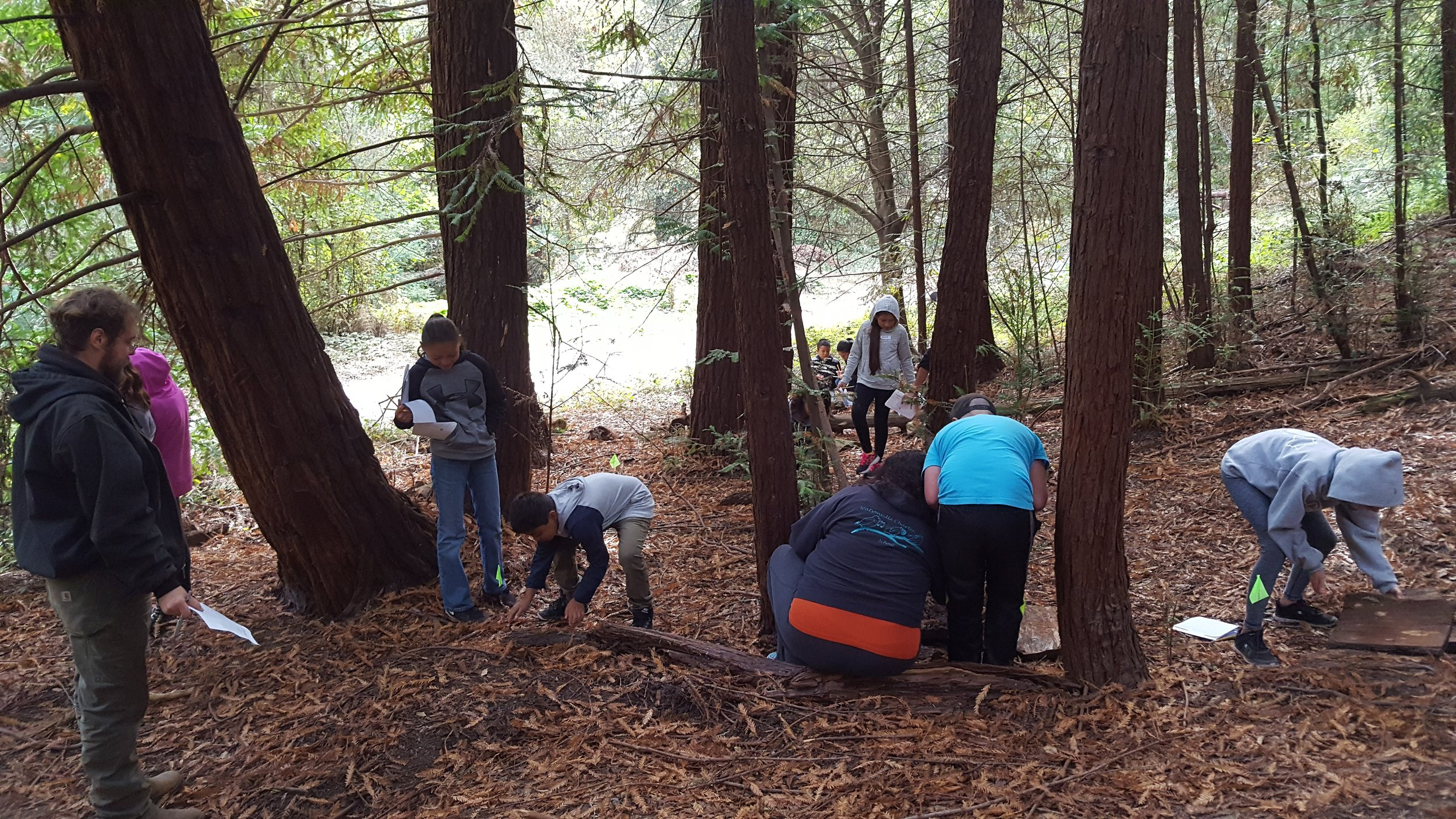 WOLF School's Salamander Study, a field study activity offered during their outdoor science school program at Camp Monte Toyon, incorporates Next Generation Science Standards.