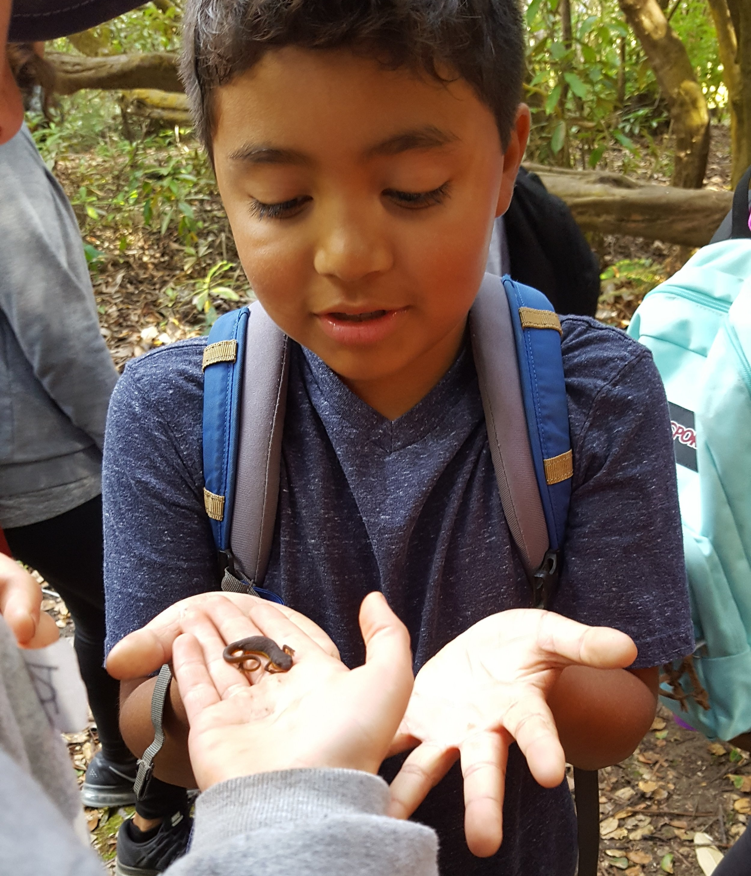 Watsonville Charter School students take turns passing around a baby salamander found during WOLF School's Salamander Study at Camp Monte Toyon in Aptos, CA.