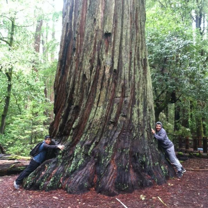 WOLF School Students Hugging a Redwood at Big Basin.jpg