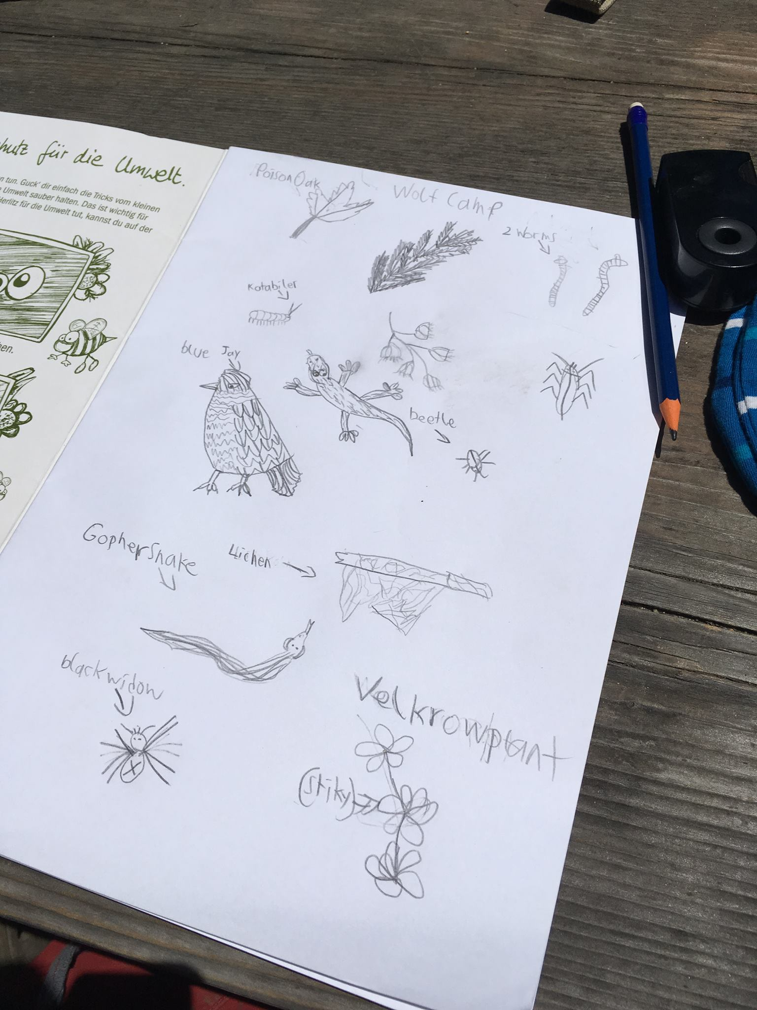 6th grade student's pencil drawings of sights in nature during WOLF School's outdoor science camp.