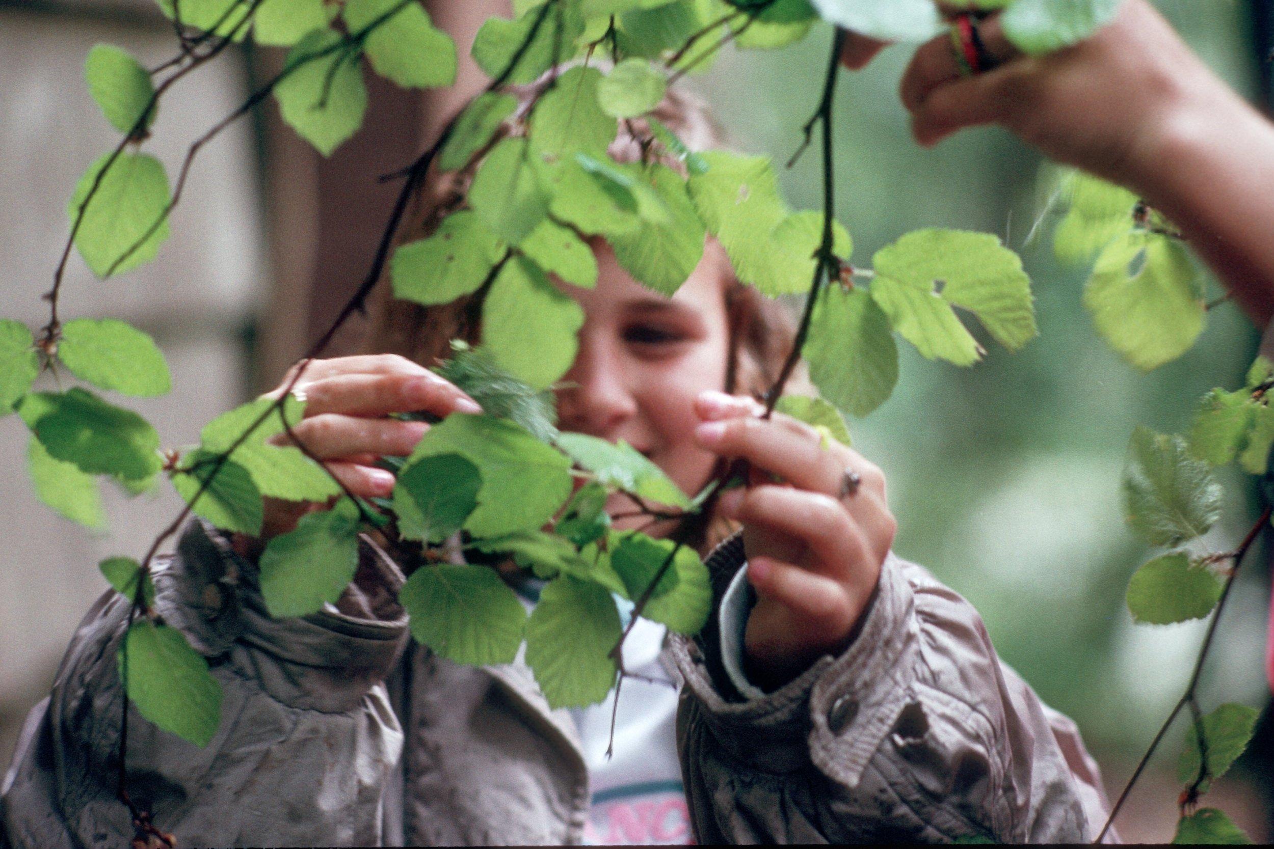 Looking at leaves-MT.jpg