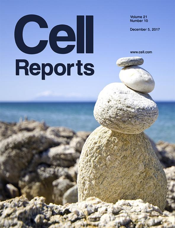 Modeling stem cell metabolism