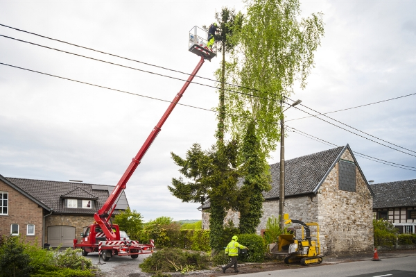If you have a eucalpytus or other giant tree, have it pruned regularly and away from power lines.