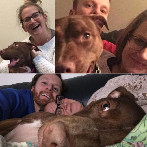 Upper left: The day we rescued Jude! Upper right: Year 1 family photo! Bottom: Year 2 family photo! (It's been a lot of cans!)
