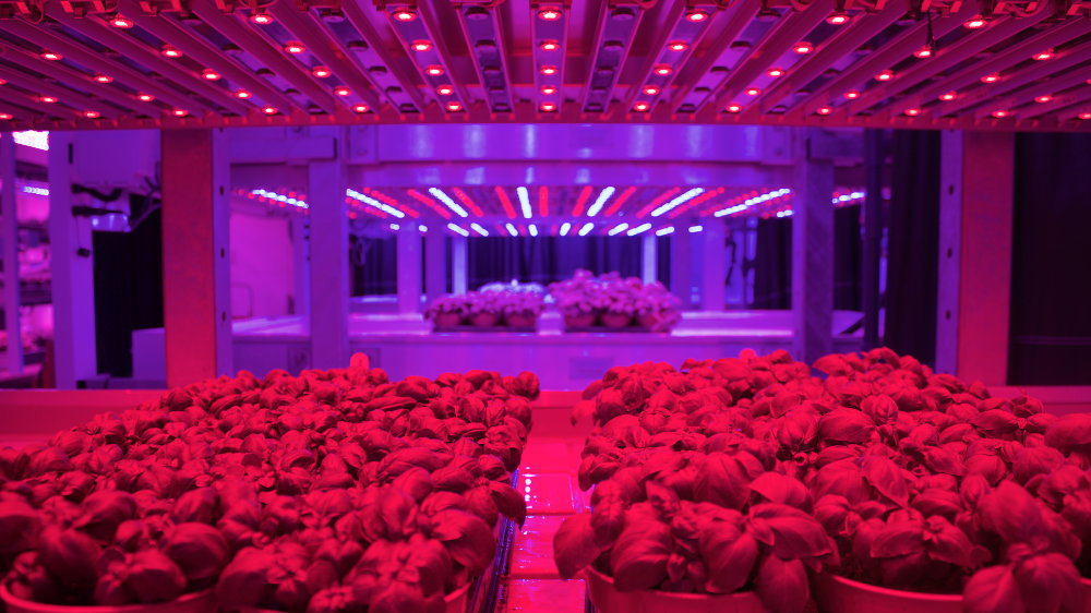 products-horticulture-led-red.jpg