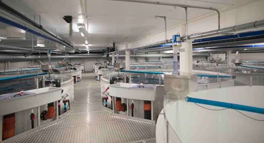Artec Aqua er en totalleverandør av landbaserte oppdrettsanlegg.