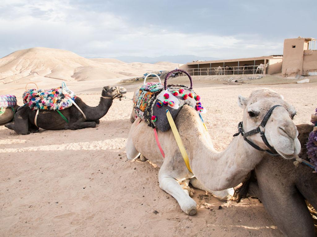Marrakech-Camel-Ride-3.jpg