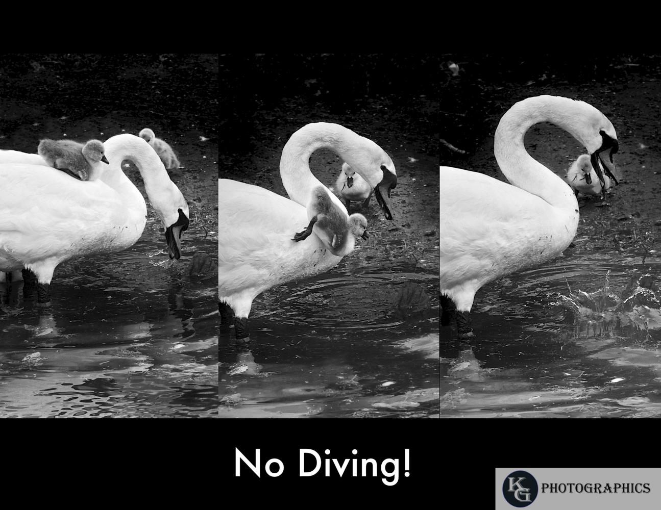 Swan-1-5.jpg