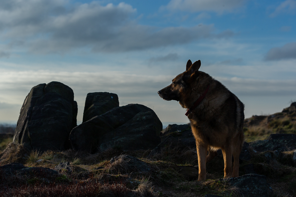 This is the sort of photograph we can achieve on our location dog photography workshops.