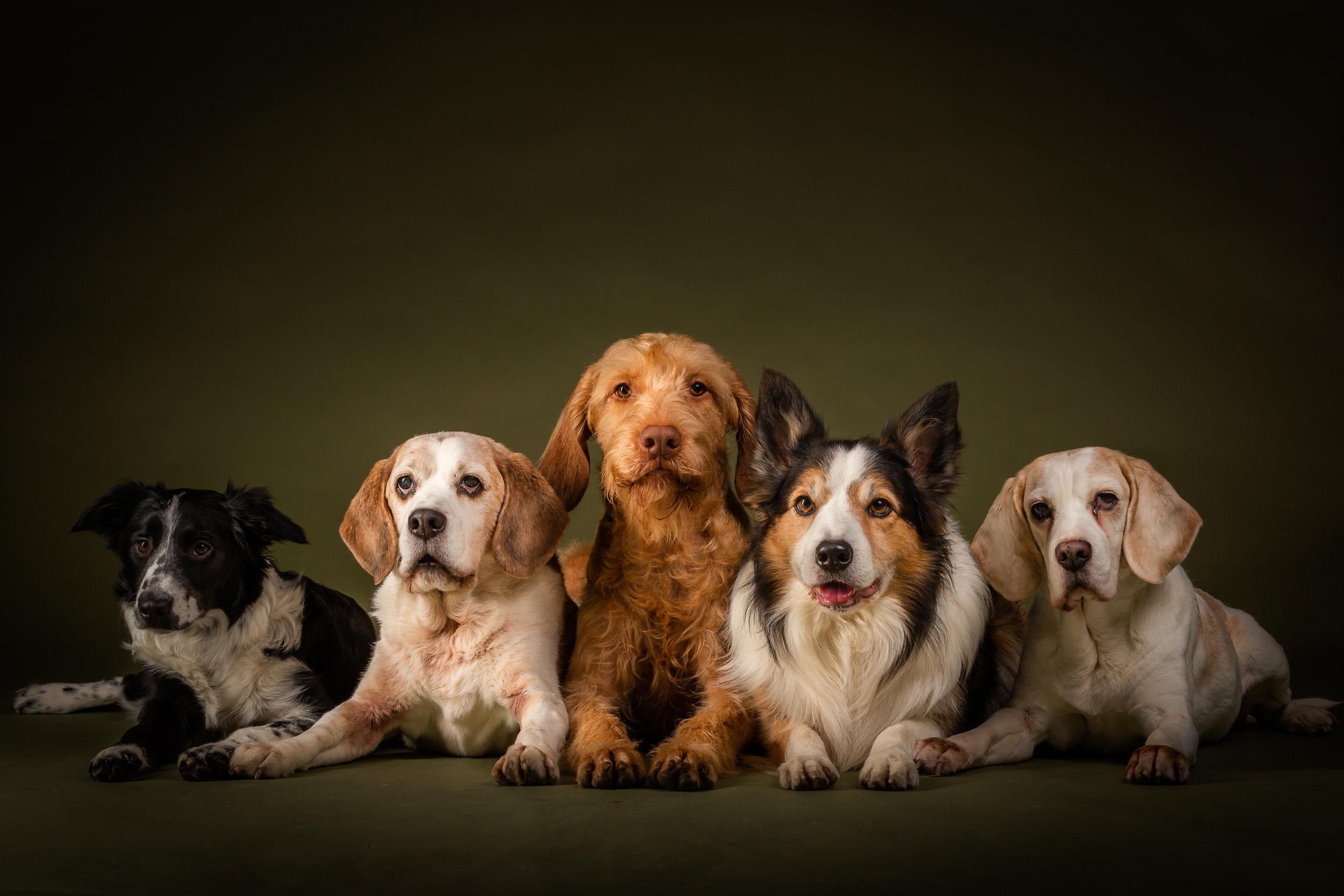 5 dog portrait studio-9154.jpg