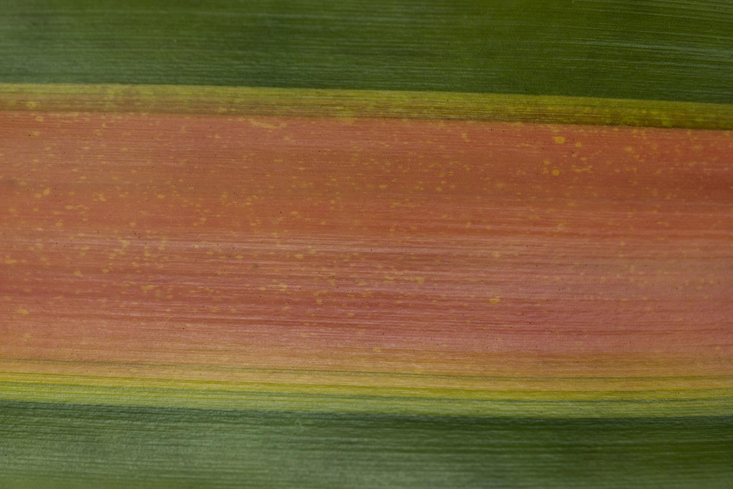 Leaf series / Texture