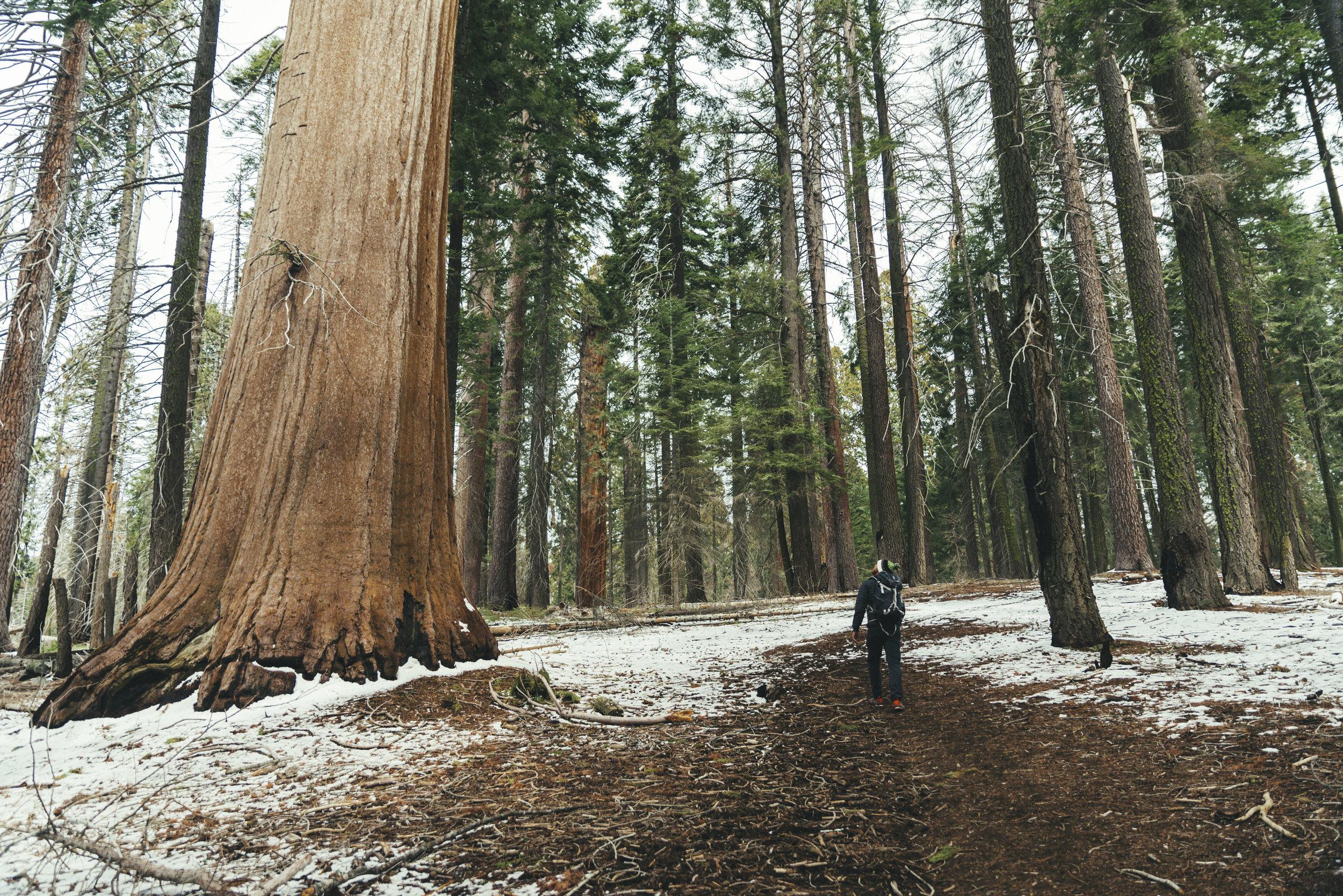 Sequoia national Park / California
