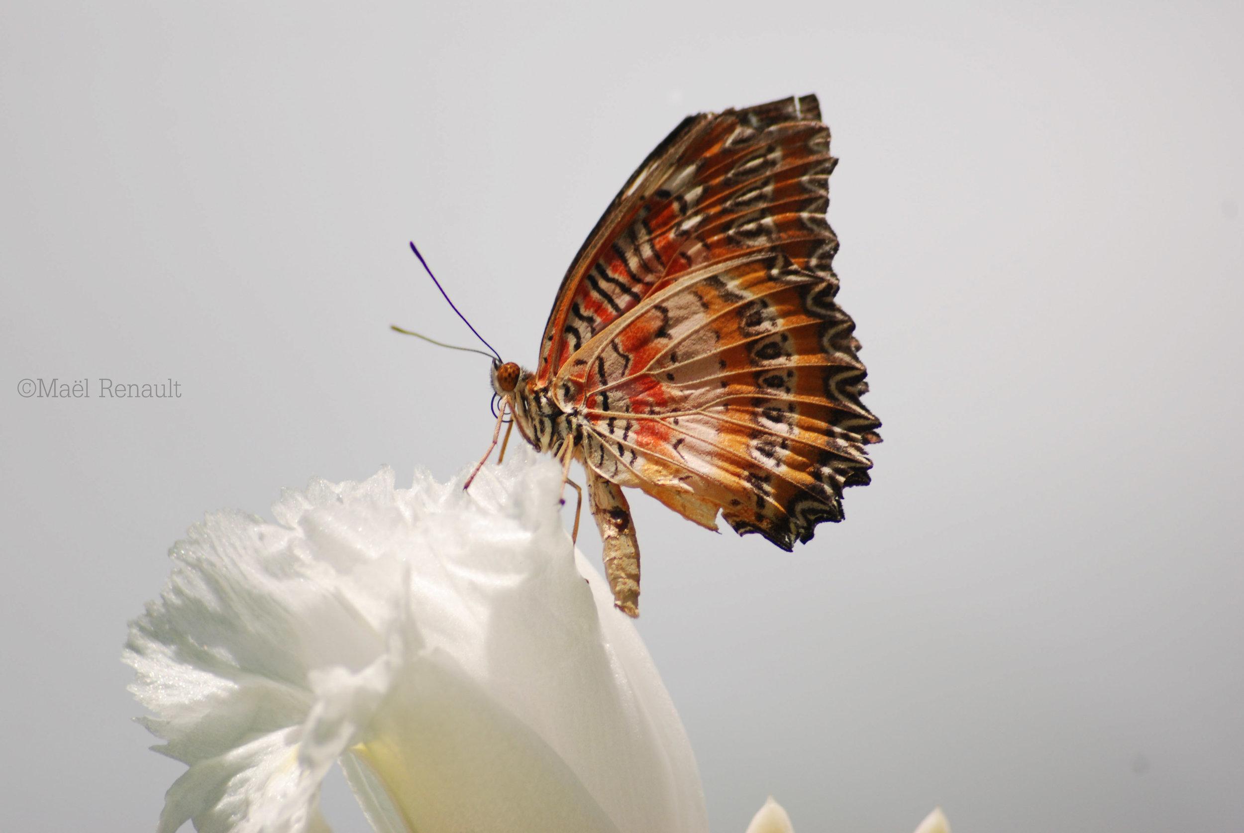 butterfly / Wildlife