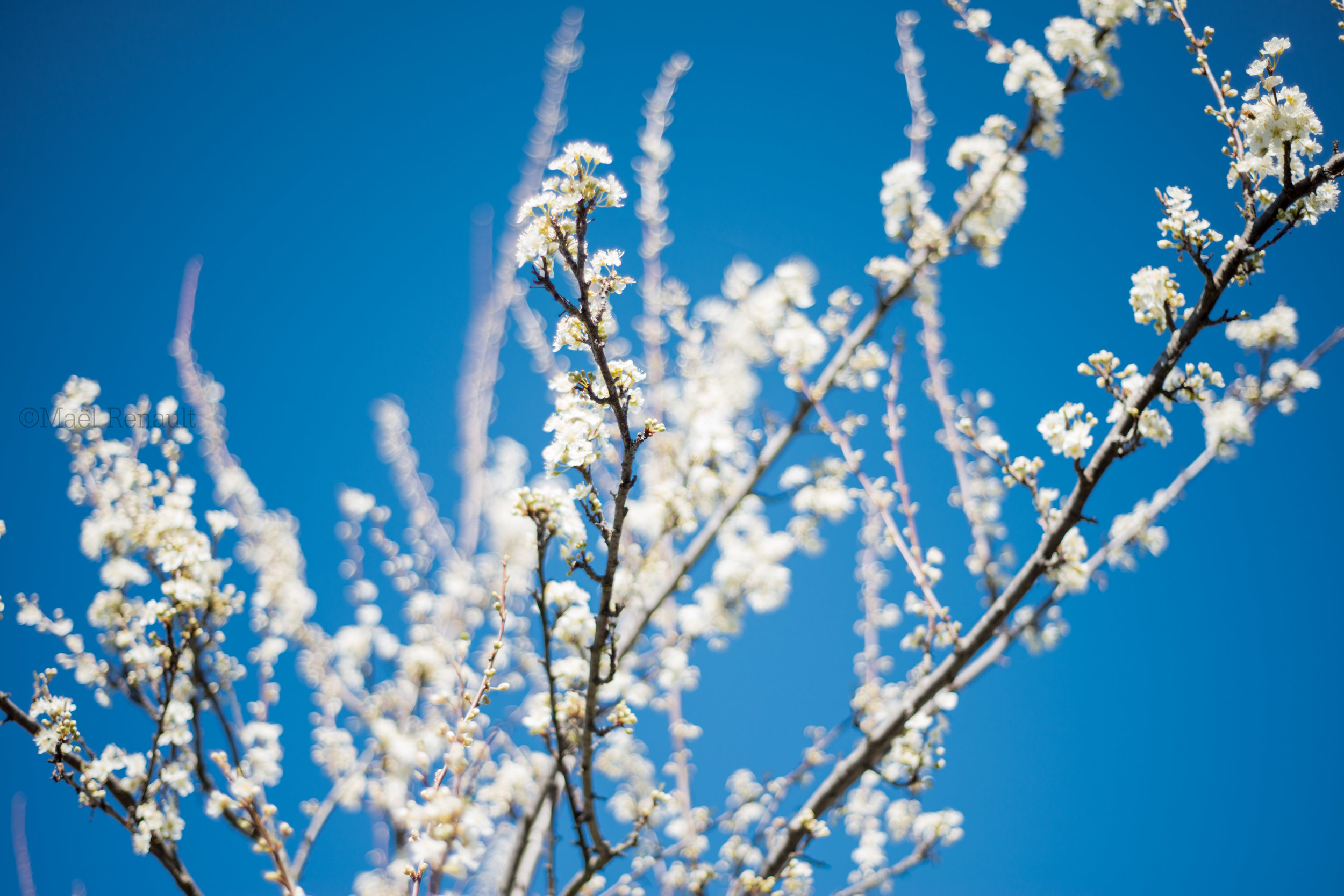 Spring / Wildlife