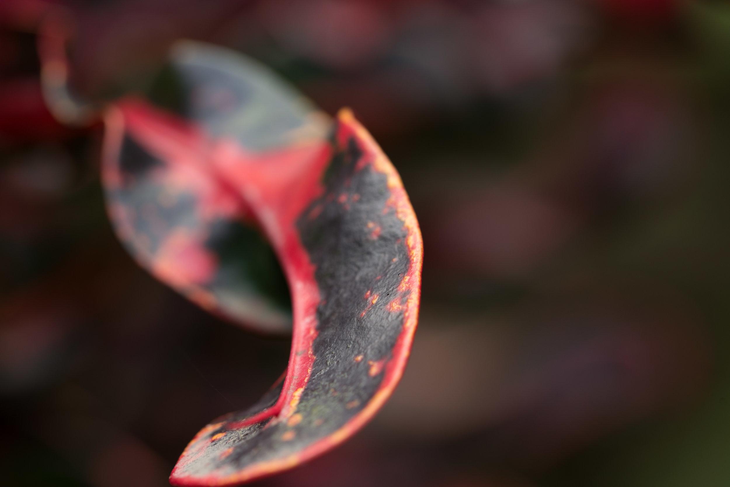 Leaf  1 / Wildlife