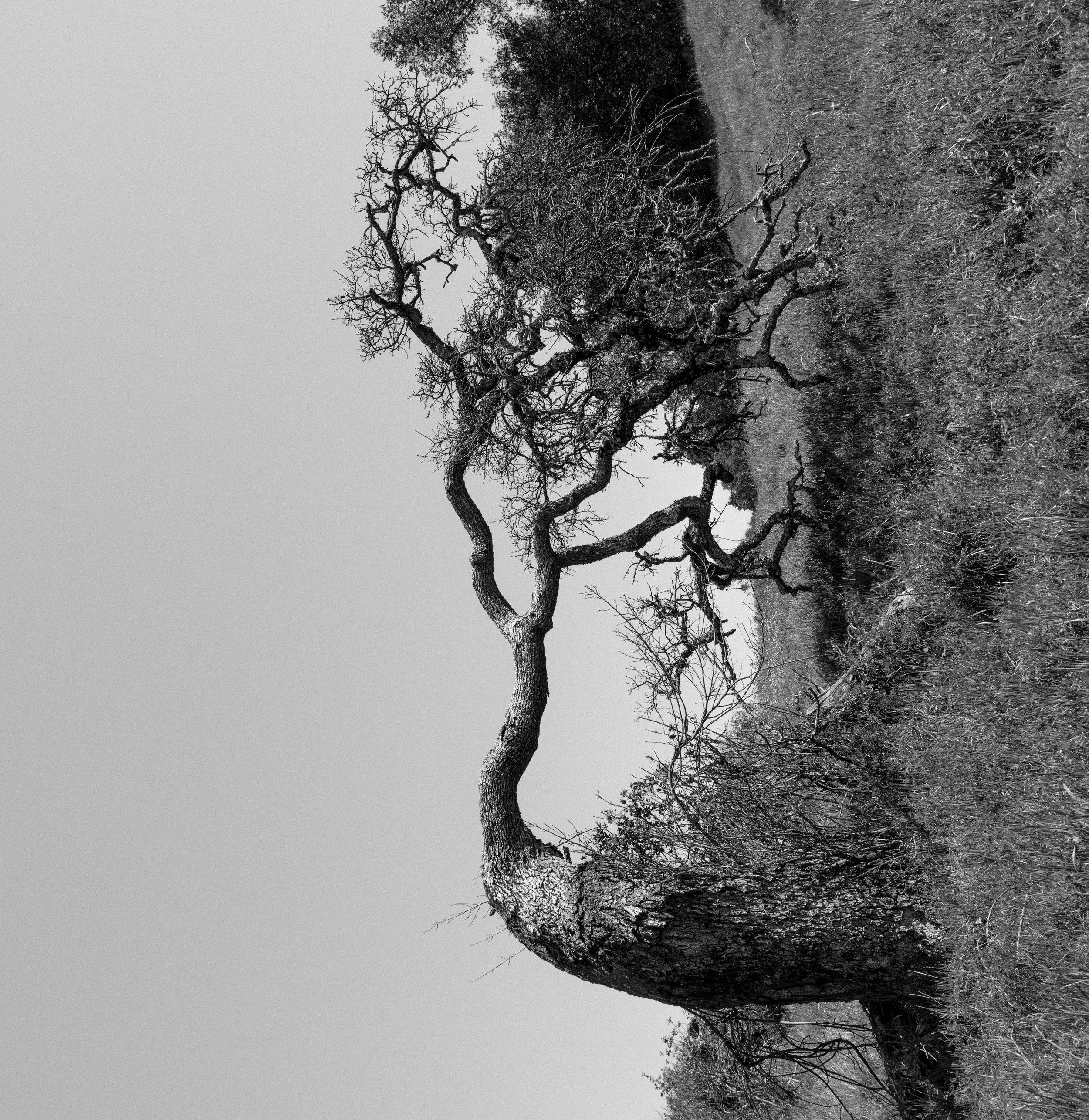 The secret tree / Napa Valley