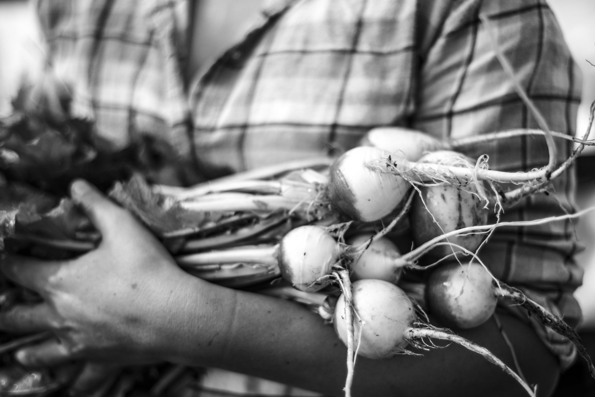 Farmer / Napa Valley