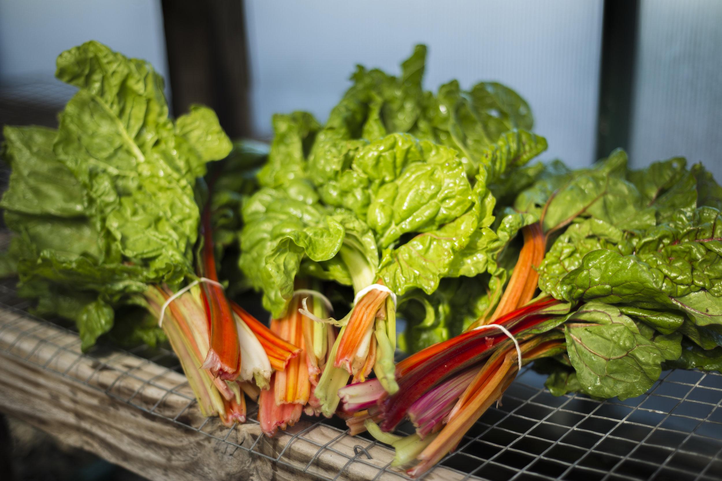 Organic farm / Napa Valley