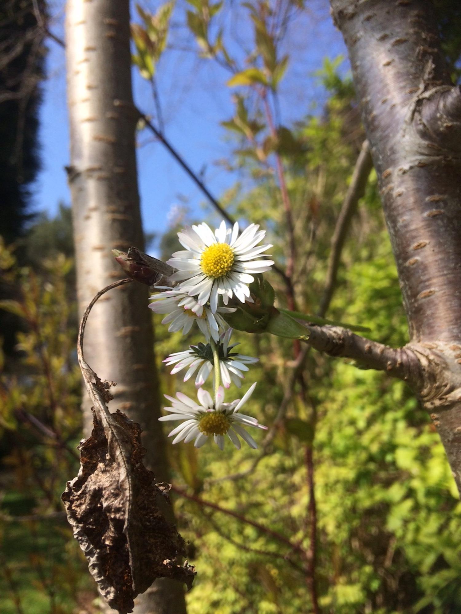 botanic_gardens_ead_2019.JPG