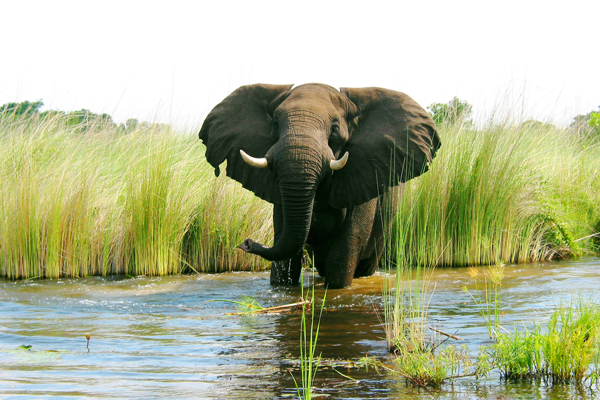 queen-elizabeth-national-park-elephant.jpg