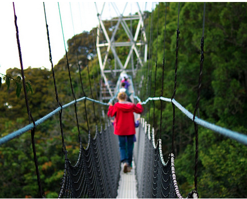 Nyungwe Canopy Walk. Photo from  Nyungwe Forest