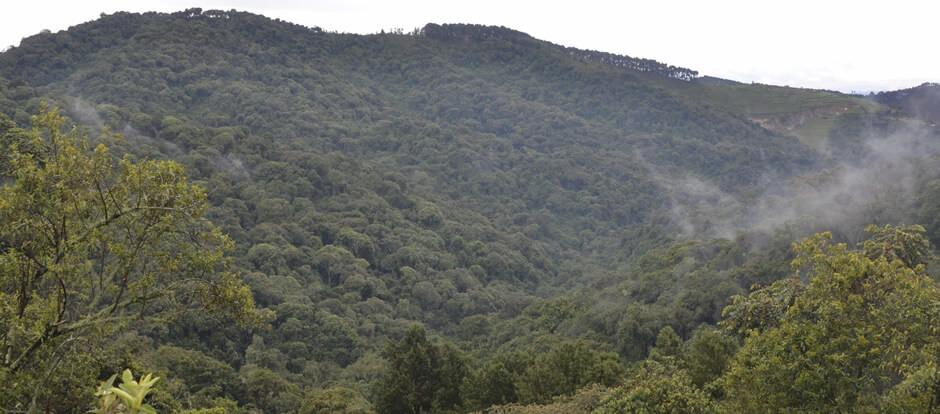 Views in Gishwati-Mukura National Park. Photo from  Gishwati-Mukura .