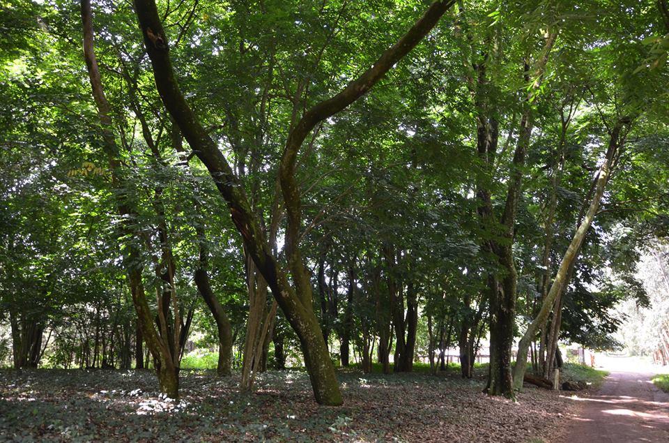 Arboretum-5.jpg