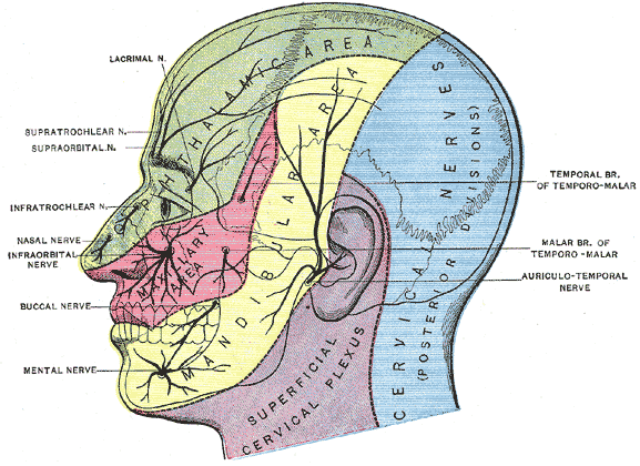 NERVE BLOCKS OF THE FACE AND MOUTH