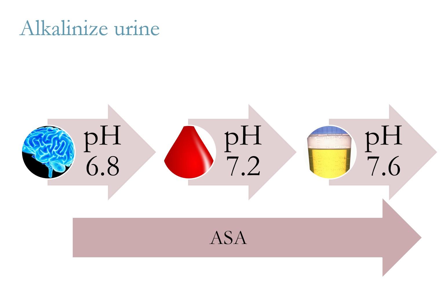 When urine is alkalinized, aspirin gets trapped in urine, setting up concentration gradient decreasing amount in brain (graphic by tammi schaeffer)
