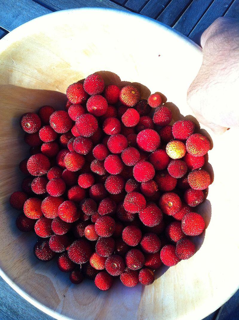 strawberry tree berries.jpg