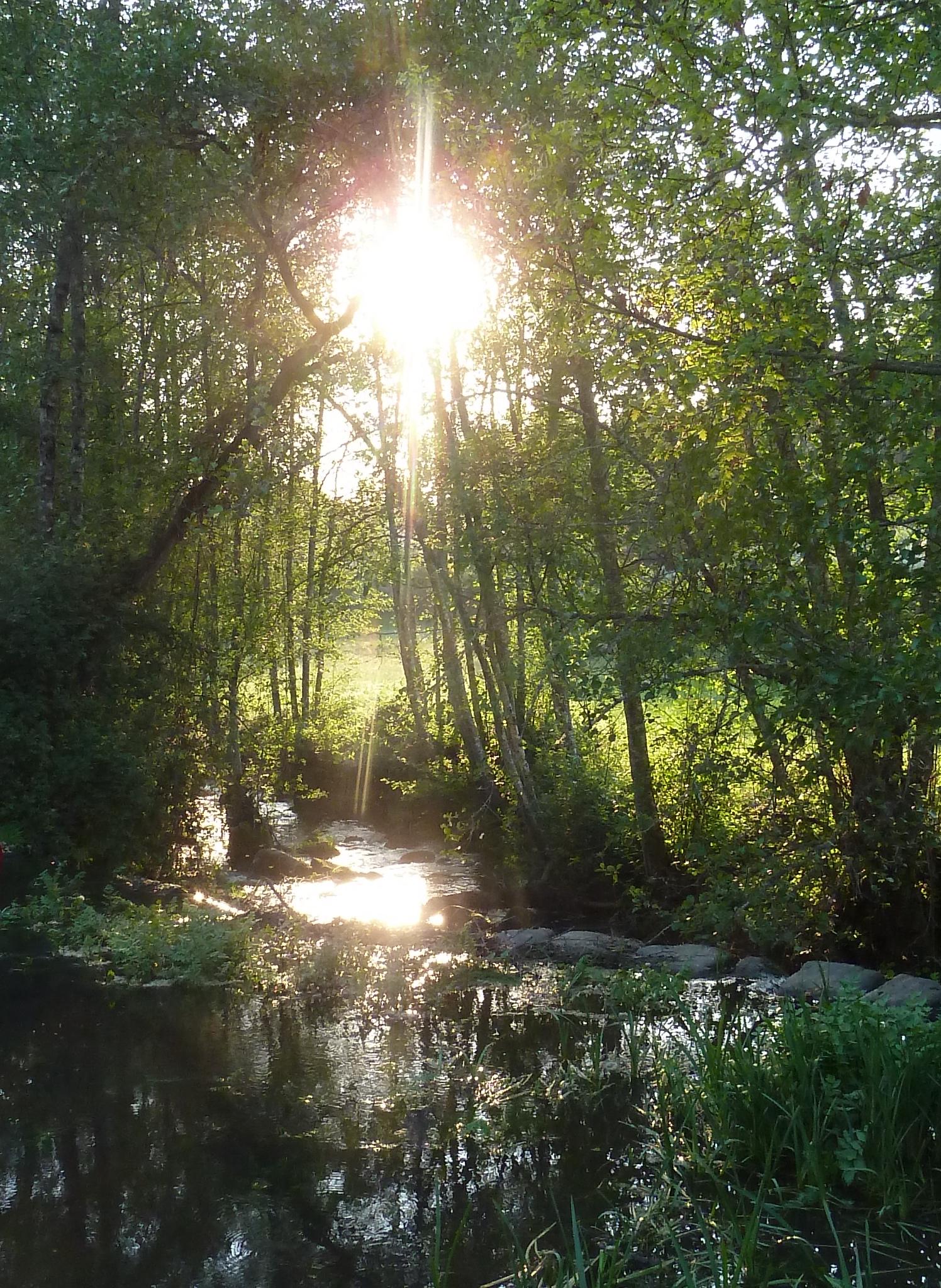 evening river.jpg