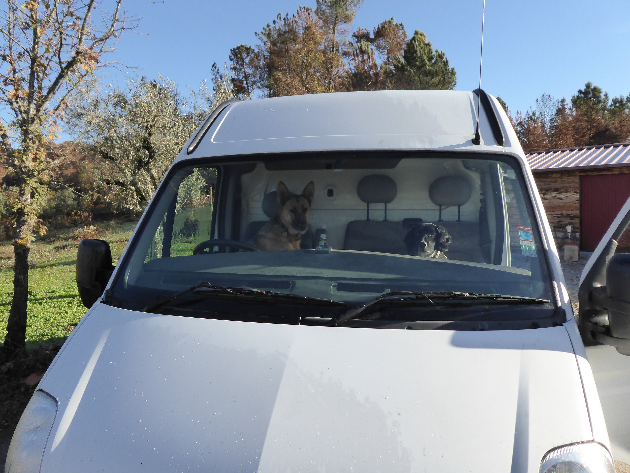 The dogs ready for their day out