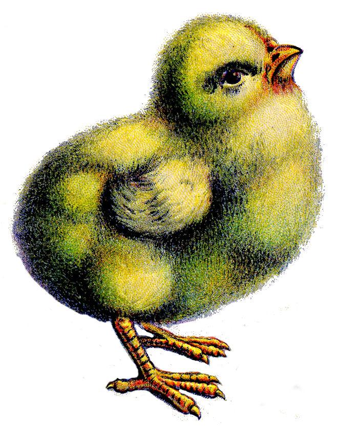 Easter Chick.jpg