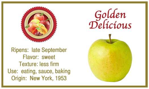 RTGolden-Delicious.jpg